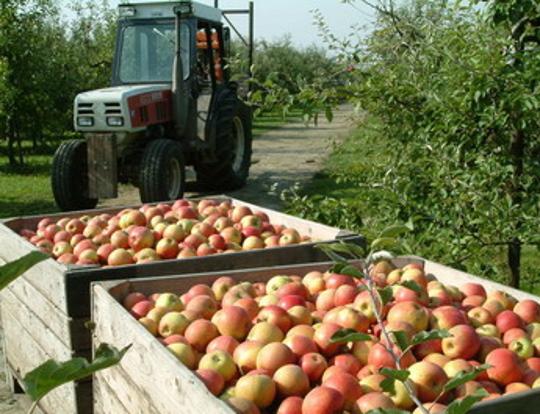 Intergrow   Toeleveringsbedrijf voor landbouw en tuinbouw